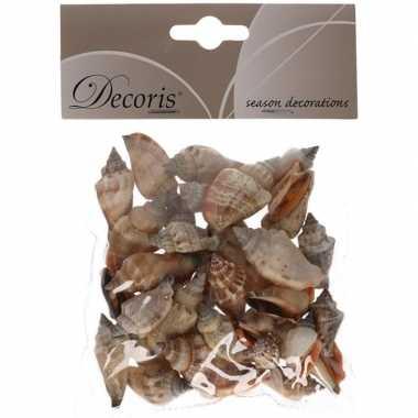 Hobby decoratie schelpen zeeslak/strombus urseum