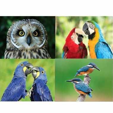 Hobby dieren magneten vogels