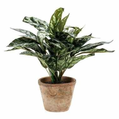 Hobby groene aglaonema/aronskelk kunstplant pot