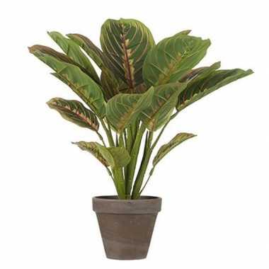 Hobby groene calathea kunstplant bruine pot