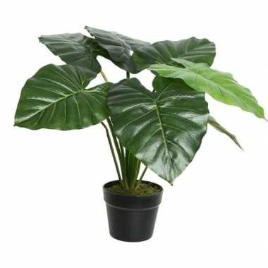 Hobby groene colocasia/taro kunstplant zwarte pot