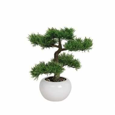 Hobby kunst bonsai boom type