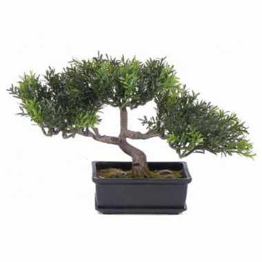 Hobby kunst bonsai boom