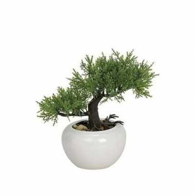 Hobby kunst bonsai boompje type