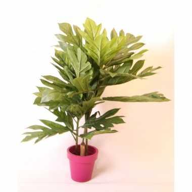 Hobby kunst broodboom fuchsia pot