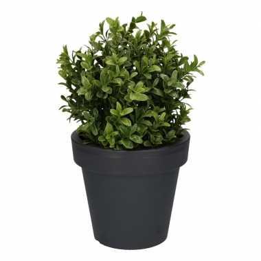 Hobby kunst buxus plant antraciet pot