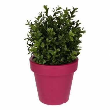 Hobby kunst buxus plant fuchsia pot