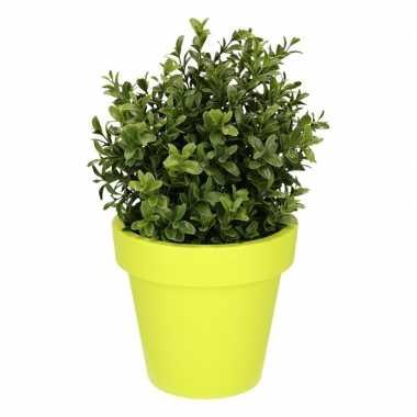Hobby kunst buxus plant lime pot