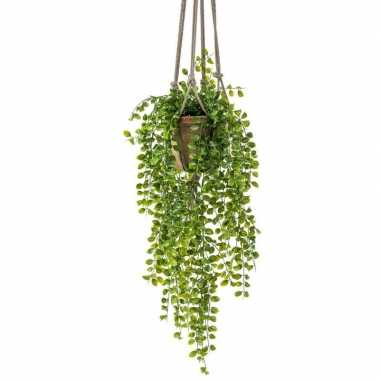 Hobby kunst hangplant ficus oude terracotta pot