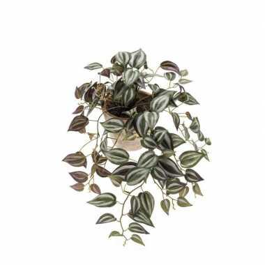 Hobby kunst hangplant tradescantia oude terracotta pot