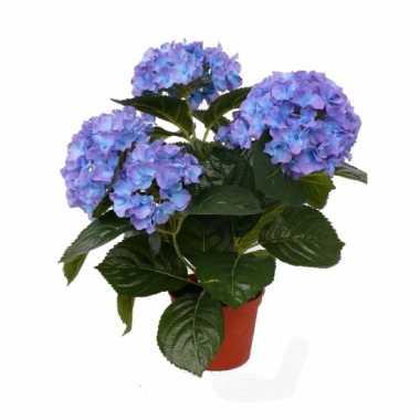 Hobby kunst hortensia plant blauw