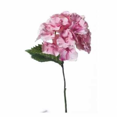 Hobby kunst hortensia tak roze