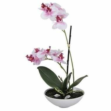 Hobby kunst orchidee pot roze/wit