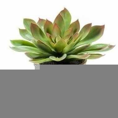 Hobby kunstplant echeveria mira oude terracotta pot