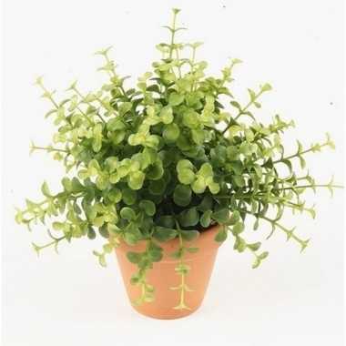 Hobby kunstplant eucalyptus groen terracotta pot