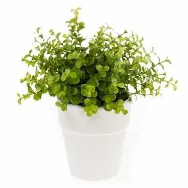 Hobby kunstplant eucalyptus groen witte pot