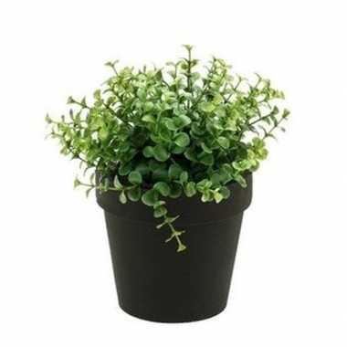 Hobby kunstplant eucalyptus groen zwarte pot