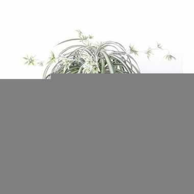 Hobby kunstplant graslelie groen/wit pot