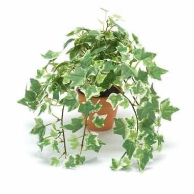Hobby kunstplant klimop groen/wit terracotta pot