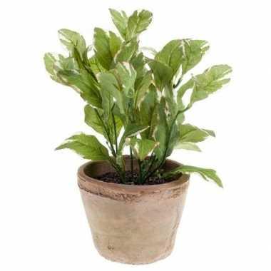 Hobby kunstplant laurier kruiden groen oude terracotta pot