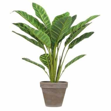 Hobby lichtgroene calathea kunstplant bruine pot
