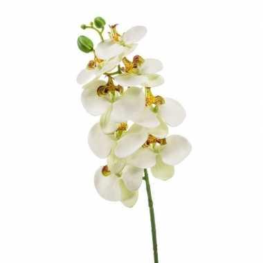 Hobby witte phaleanopsis/vlinderorchidee kunstbloem
