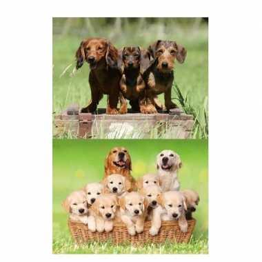 Hobby x dieren magneten d honden