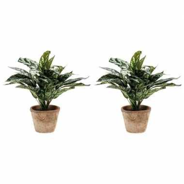 Hobby x groene aglaonema/aronskelk kunstplanten pot