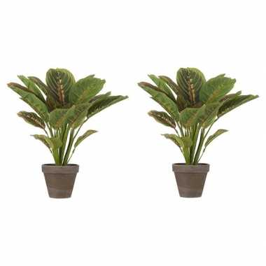 Hobby x groene calathea kunstplanten bruine pot