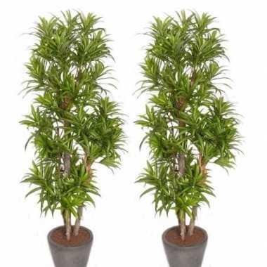 Hobby x groene dracaena reflexa kunstplanten binnen