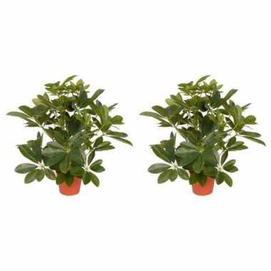 Hobby x groene schefflera/baby struik kunstplanten binnen