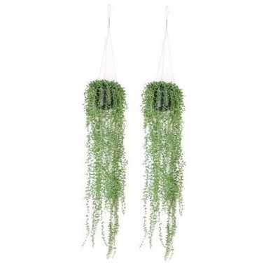 Hobby x groene senecio/erwtenplant kunstplanten hangende pot
