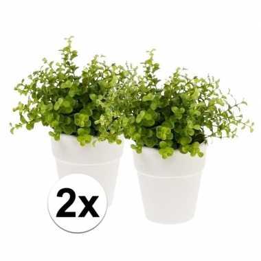 Hobby x kunstplant eucalyptus groen witte pot