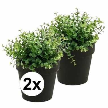Hobby x kunstplant eucalyptus groen zwarte pot