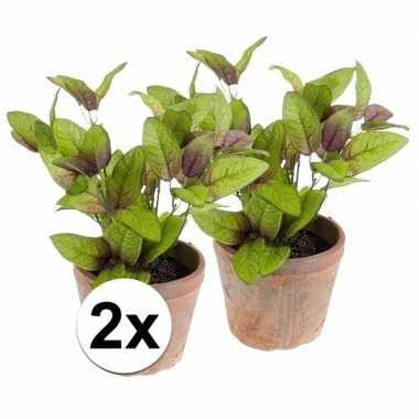 Hobby x kunstplant salie kruiden groen oude terracotta pot