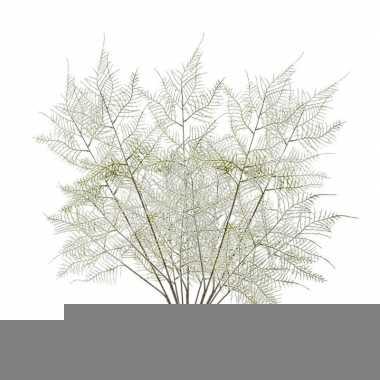 Hobby x kunstplanten aspergeplant takken groen