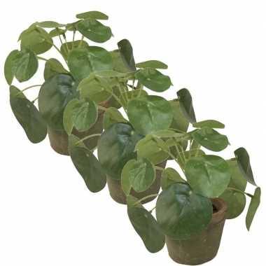 Hobby x kunstplanten pilea groen pot