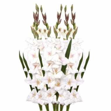 Hobby x witte gladiolen kunstbloemen takken