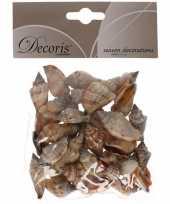 Hobby decoratie schelpen zeeslak strombus urseum