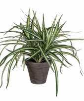 Hobby dracaena kunstplant groen grijze pot h d