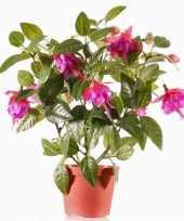 Hobby fuchsia plant donkerroze pot