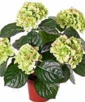 Hobby kunst hortensia plant groen roze