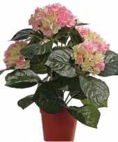 Hobby kunst hortensia plant roze groen