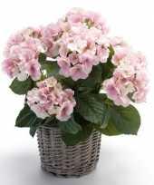 Hobby kunstplant hortensia roze rieten mand