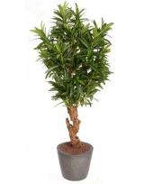 Hobby oleander struik bladeren