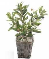 Hobby olijf boompje olea europaea kunstplant gevlochten kunststof pot