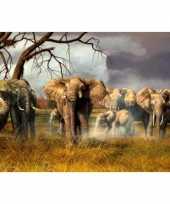 Hobby placemat olifanten d