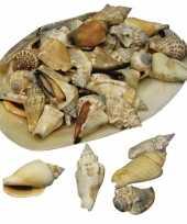 Hobby puntige decoratie schelpen grote schelp