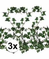 Hobby x klimop slinger hedera helix 10106157
