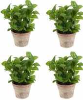 Hobby x kunstplanten basilicum kruiden groen terracotta pot